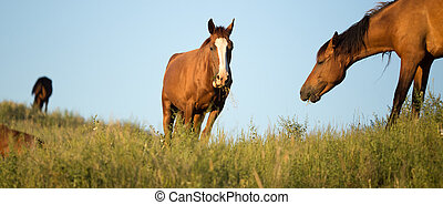 horses in the pasture at sunset