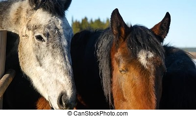 Horses in the pen close up. Close-up portrait of horses on pasture