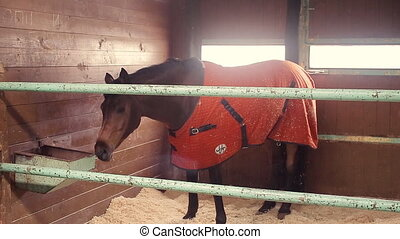 horses in the stable - horses is staying in the stable