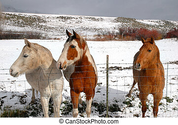 Horses in winter time