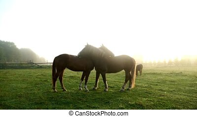Horses kissing on green field. Horse couple. Horses love
