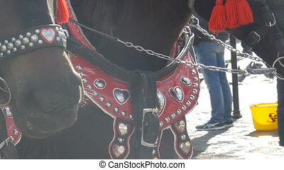 Horses Muzzles in Cold Day - Close-up shot of red harness...