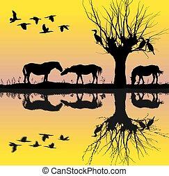 Horses near the lake and cormorants