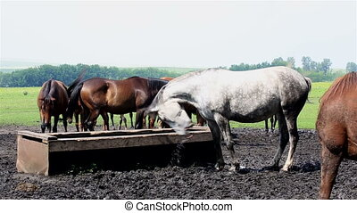 Horses nod their heads in unison (saved from annoying...