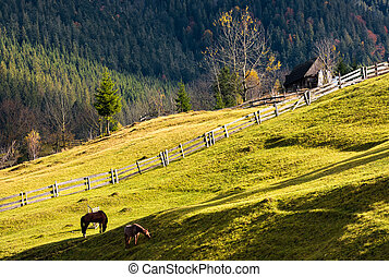 horses on a grassy hillside near the village - horses...