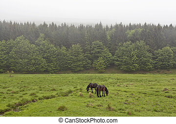 Horses on a green meadow 2 - Horse in the meadow in the mist...