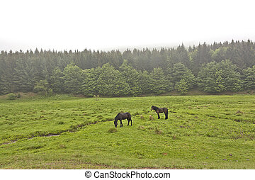 Horses on a green meadow 5 - Horse in the meadow in the mist...