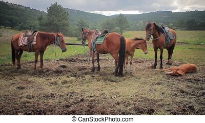 Horses on a leash against mountains
