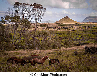 Horses On Easter Island