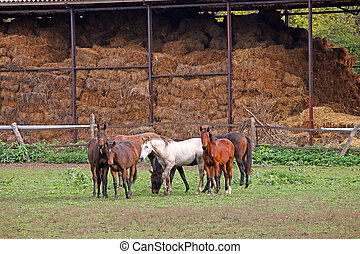 horses on farm