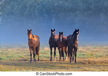 horses on misty pasture