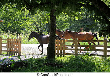 Horses on nature.