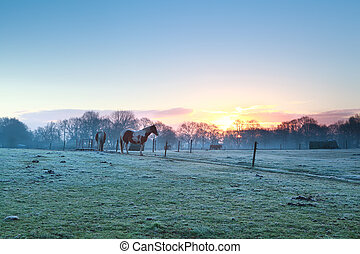 horses on pasture at spring sunrise