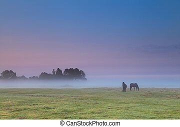 horses on pasture at sunrise