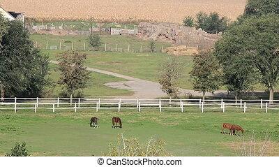 horses on pasture farmland