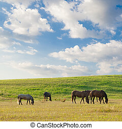 Horses on pasture in summer day