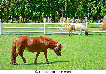 horses on pasture - horses eating on a spring pasture.