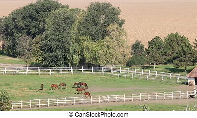 horses on ranch aerial view