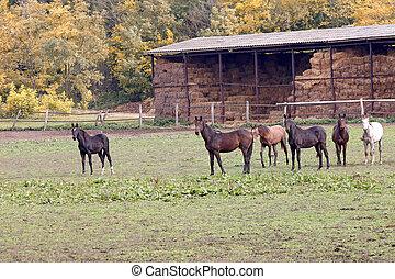horses on the farm autumn season