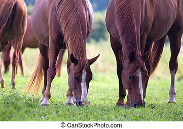 Horses on the field