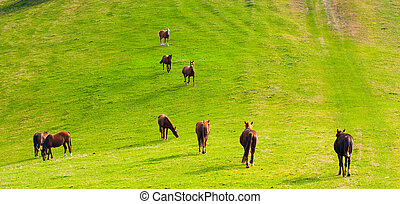 Horses on the hills