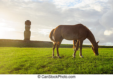 Horses on the  Isla de Pascua. Rapa Nui. Easter Island. Down