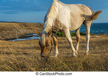 Horses on the meadow near the water