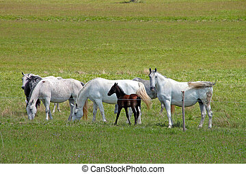 Horses on the pasture