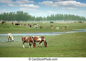 horses on the pasture landscape