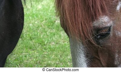 Horses on the ranch eat dry food. Portrait of a horse...