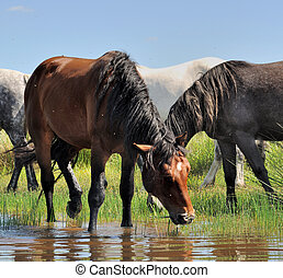 horses on the shore of a lake