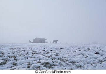 horses on winter pasture in dense fog