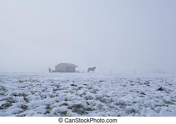horses on winter pasture in dense fog