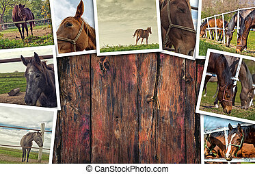 Horses photo collage