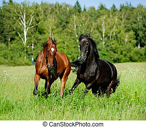horses play on a freedom