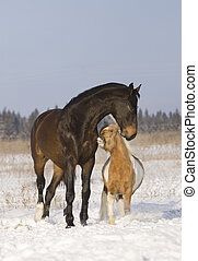 horses playing in snow