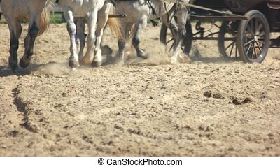 Horses pulling a wagon through a dusty field. Close up of...