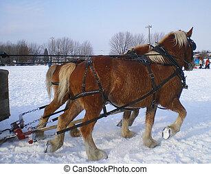 Horses pulling sled on snow
