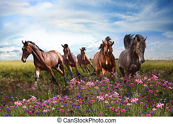Horses quickly jump on a flowering meadow