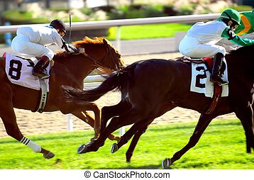 Horses racing - Jockeys racing thoroughbred horses on a turf...