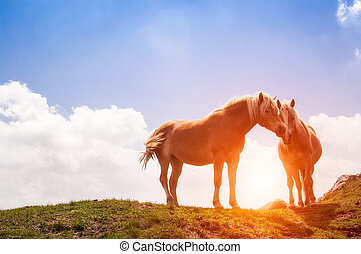 horses rest during the sunset in the mountain