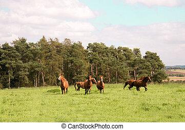 Horses run across the meadow.