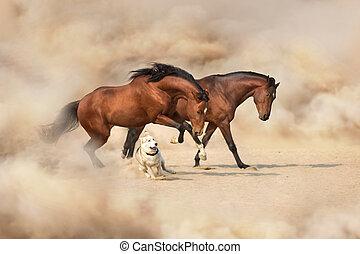 Horses run gallop indesert dust