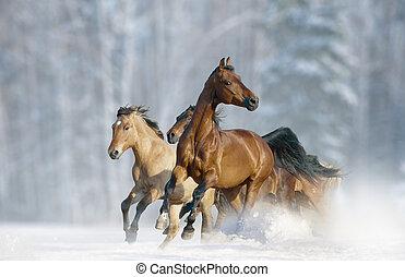 horses run in a wild