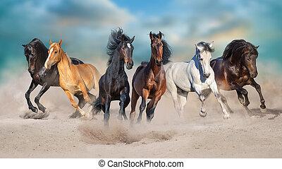 Horses run in sand