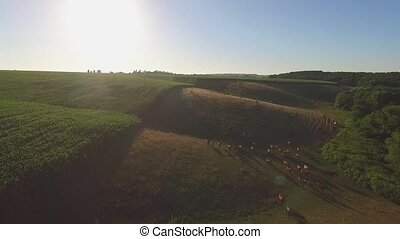 Horses run in slo-mo. Herd on grassy hills. Reach common...