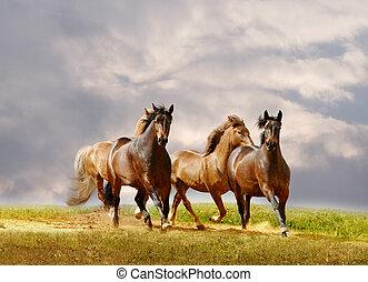 horses run