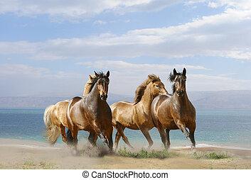 horses run - horses in summer