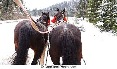 Horses run with bells in winter