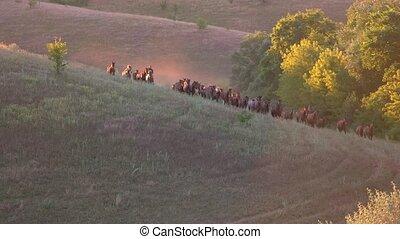 Horses running in slo-mo. Horseman near the herd. Strive...